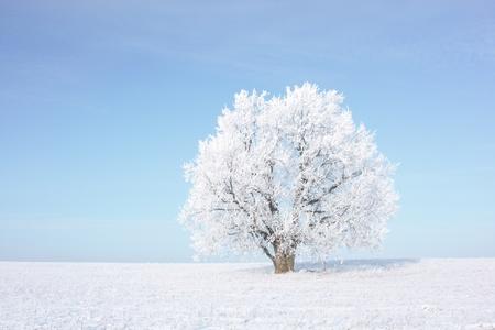 Frozen tree on winter field Stock Photo - 8323304