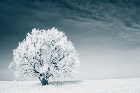 Frozen tree on winter field and blue sky Stock Photo - 8333282