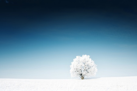 Alone frozen tree in a winter field and deep blue clear sky Stock Photo - 8333193