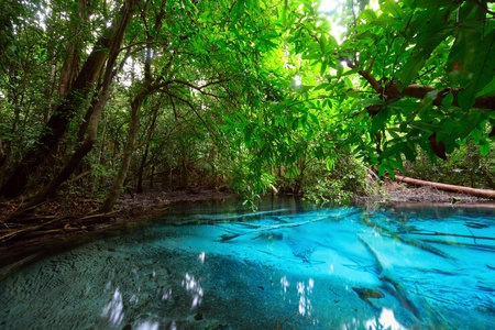 Pond with clear blue water in tropical forest photo