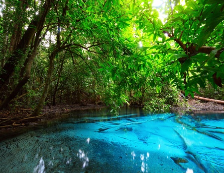 Pond in jungle with clear blue water photo