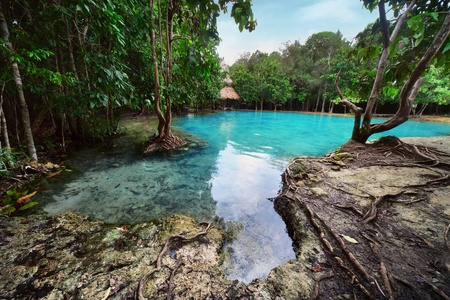 Pond in jungle with clear blue water Stock Photo - 8581149