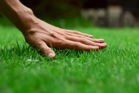 touching hands: Hand on green lush grass Stock Photo