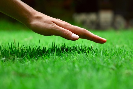 lawn care: Hand over green lush grass Stock Photo