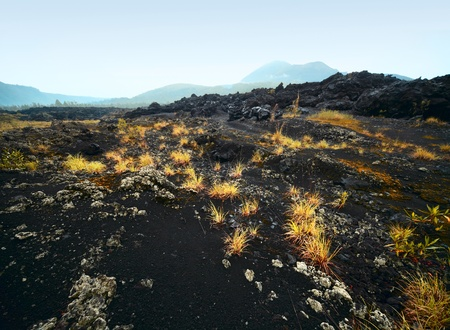 soil pollution: Yellow plant on volcano soil. Volcano Agung (Bali, Indonesia) on a horizon. Stock Photo
