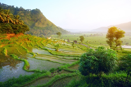 indonesia people: Rice terrace in mountains. Bali. Indonesia Stock Photo