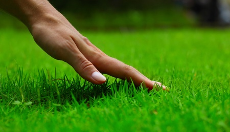 Hand over green lush grass photo