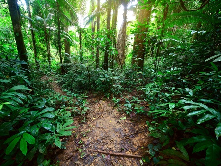 Path in a green wild tropical forest photo