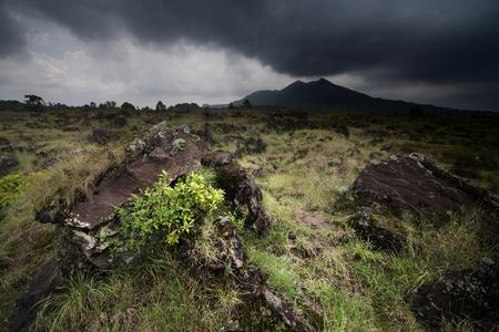 Plants among rocks on volcano soil. Volcano Agung. Bali photo