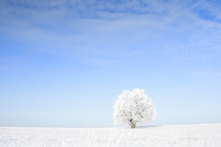 Frozen tree on winter field and blue sky Stock Photo - 9266668