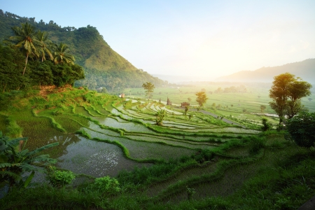 indonesia people: Rice tarrace in mountains. Bali. Indonesia