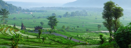 Rice tarraces in mountains and road through it. Bali. Indonesia photo