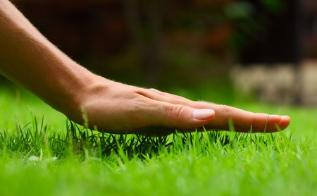 Hand above green fresh grass on a meadow. Shallow DOF