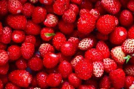 strawberies: Closeup of heap of ripe wild strawberies