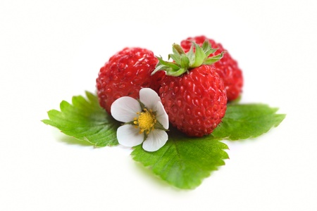 strawberies: Wild strawberies with green leaves and flower isolated on white