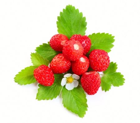 Wild strawberies heap with green leaves and flower isolated on white photo