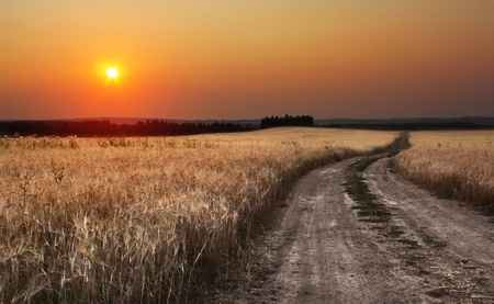 Rural dusty countryside road trough a field with ripe wheat photo