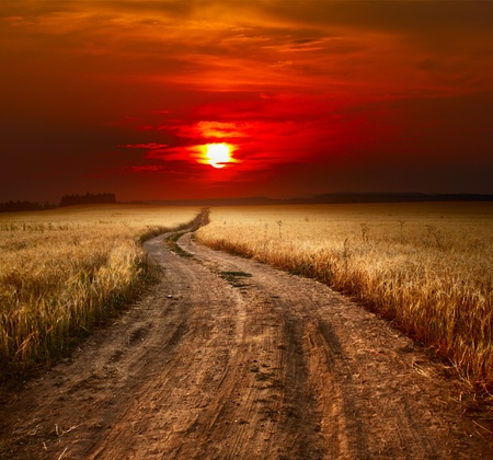 trough: Rural dusty countryside road trough a field with ripe wheat Stock Photo