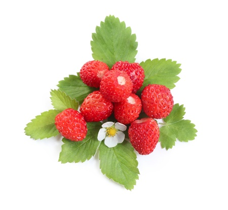 strawberies: Wild strawberies heap with green leaves and flower isolated on white Stock Photo