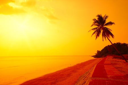 Palm tree on a beach and yellow sky with sun photo