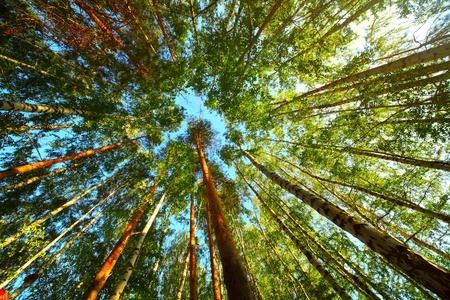 Les arbres dans une forêt Banque d'images