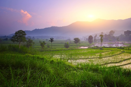 bali: Tropical valley with rice terraces and trees. Bali. Indonesia