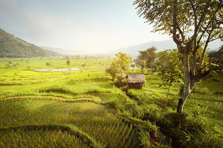 serene landscape: Tropical valley with rice terraces and trees. Bali. Indonesia