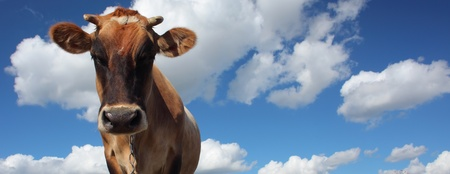 Brown cow looking to a camera on blue cloudy sky background Stock Photo - 11149546