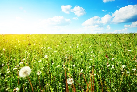 Meadow with wild herbs and flowers at sunny day with blue sky backgound photo