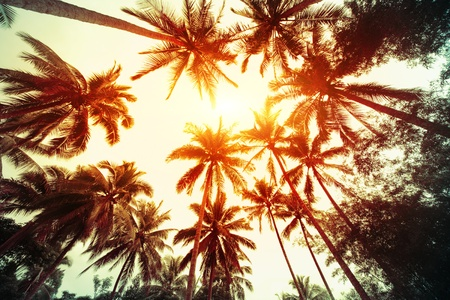 bark palm tree: Group of a palm trees with sunny sky on the background Stock Photo
