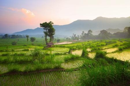 Tropische vallei met rijst terrassen en bomen. Bali. Indonesië Stockfoto