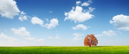 Alone red autumn tree on a green meadow and blue sky with clouds photo