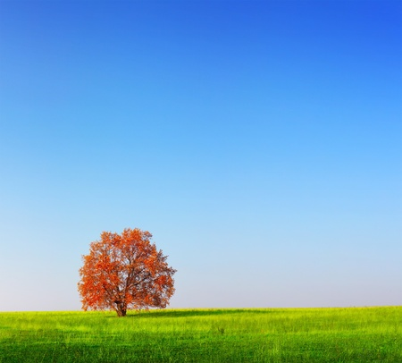 Alone red autumn tree on a green meadow with blue clear sky photo