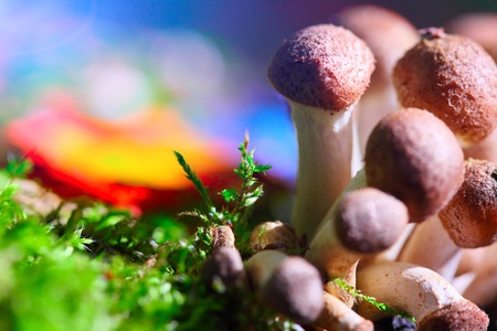 Group of mushrooms in moss with colorful vivid background photo