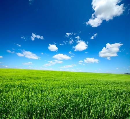 緑の芝生と青い空の雲と草原 写真素材