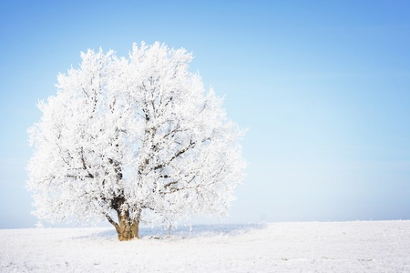 Frozen tree in field with clear blue sky on the background. photo