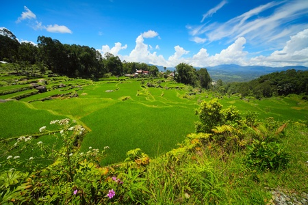 Green rice field and storm clouds over mountains photo