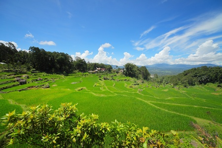 Green rice field and storm clouds over mountains Stock Photo - 11540718