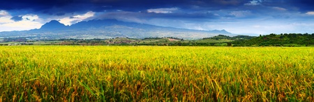Dark storm clouds over mountains and yellow ripe rice fields with small wooden buildings photo