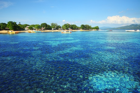 sulawesi: Coral reef in Bunaken national park. Area near village Bunaken. Sulawesi island. indonesia