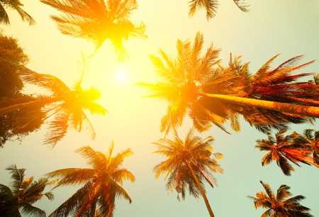 Palm trees and yellow sun in a sky photo