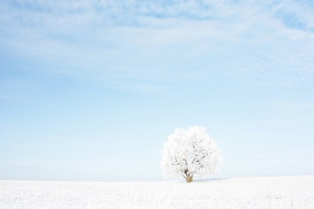 Alone frozen tree in snowy field and airy blue sky Stock Photo - 11540679
