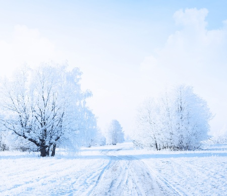 Winter rural road in a forest with frozen trees photo