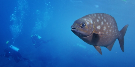 Underwater shoot of a funny fish with open mouth fining in blue clear water and group of divers making a bubbles on the background Stock Photo - 16835614