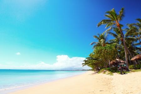 화창한 날에 야자수와 열 대 모래 해변. 발리 섬의 남쪽, 짐바란 비치