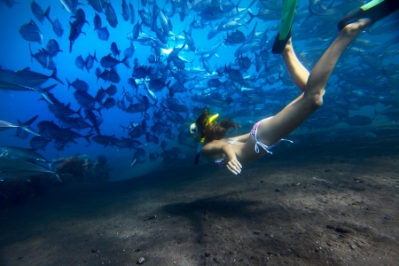 breath hold: Young woman finning on depth with a school of Jack Fish on a breath hold Stock Photo