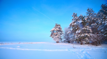 Winter field with trees in a snow and clear blue sky photo
