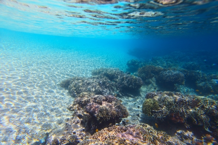 Underwater shoot of a vivid coral reef with a tiny fishes in clear water and sandy bottom of a beach Stock Photo - 16835696