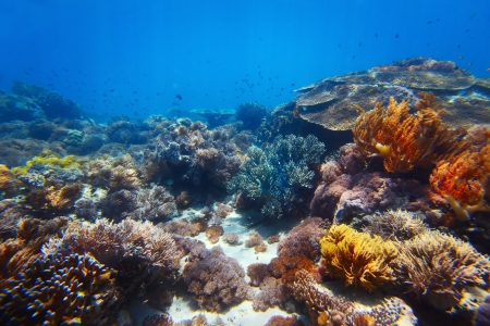 coral reef: Underwater shoot of vivid coral reef with a fishes