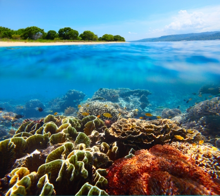 bottom of sea: Coral reef and clear sea of the Bali Barat National Park Stock Photo